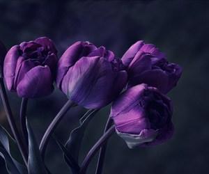 flowers, purple, and tulips image