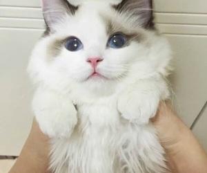cat, white, and animals image