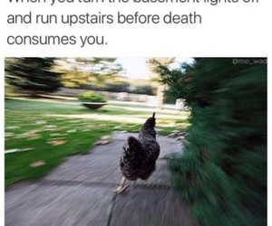 funny, Chicken, and lol image