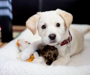 dog, puppie, and cute image