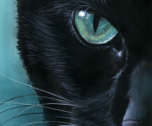 alternative, cat, and digital image
