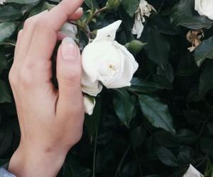 flower, grunge, and vsco image