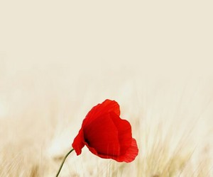 flowers, red, and field image