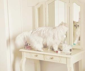 cat, dresser, and interior image