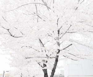 aesthetic, cherry blossom, and minimal image