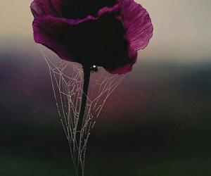 beauty and flower image