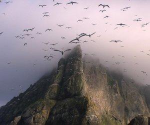 bird, landscape, and nature image