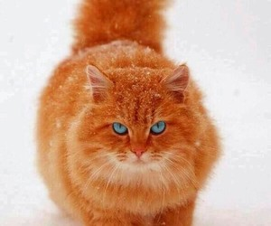 animals, cats, and cat's in snow image