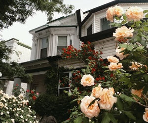house, flowers, and rose image