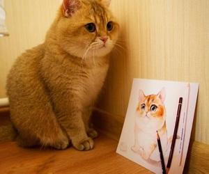 animals, cat, and cute cat cat image