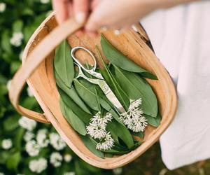 basket, flower, and leaves image