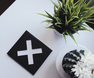 plants, grunge, and white image