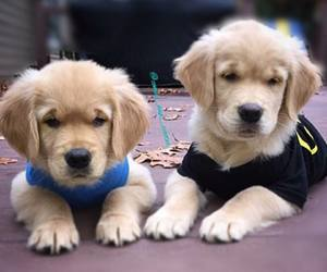 animals, pretty, and puppies image