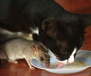 cat, animal, and mouse image