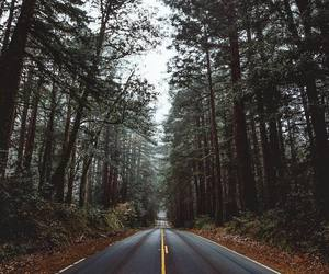 adventure, car, and forest image