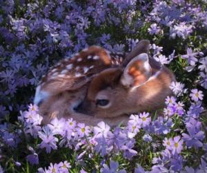 deer and doe deer image