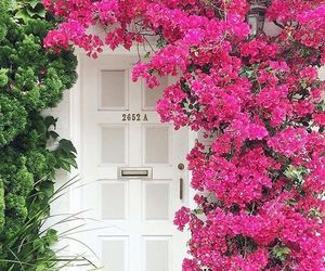 flowers, beautiful, and garden image