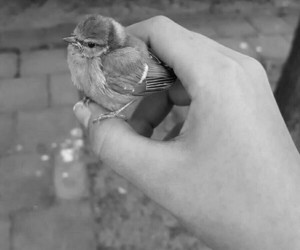 animals, bird, and grey image