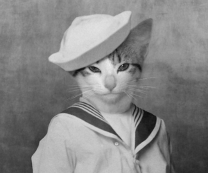 cat, kitten, and sailor image
