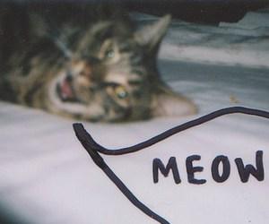 analog, animal, and cat image