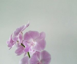 flower, orchid, and orquídea image