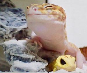gecko smile image