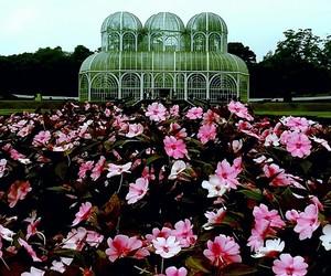curitiba, flowers, and jardim botânico image