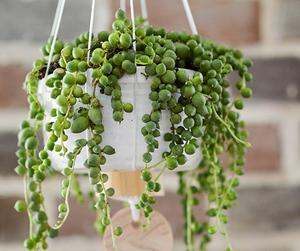 diy, plant, and planter image