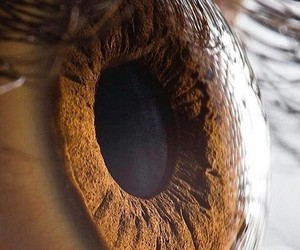 brown beatiful eye image