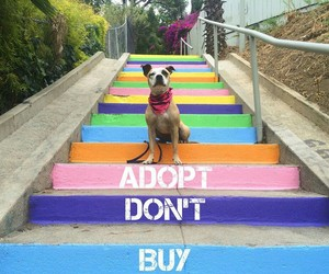dog, animal, and adopt image