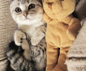 cat, love, and bear image