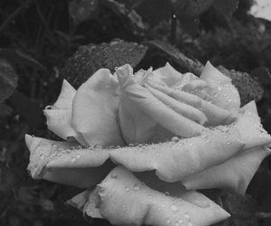 flowers and b&w image