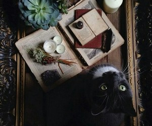 cat, magic, and witchcraft image