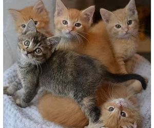 kitty, animals, and pets image