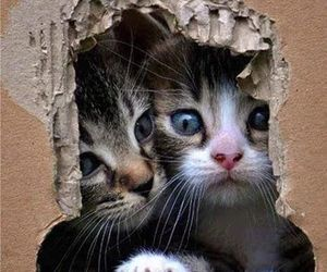 kitty, animals, and cats image