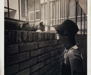 cat, nam taehyun, and southth image