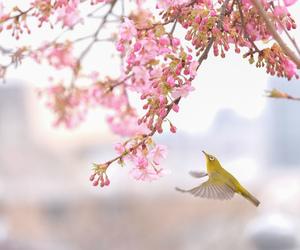 bird, japan, and nature image