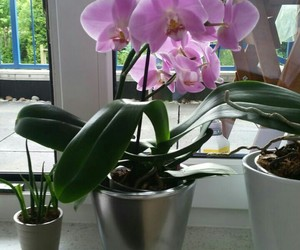 beautiful, flouers, and orchidee. image
