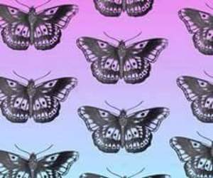 butterfly, tatto, and harry image