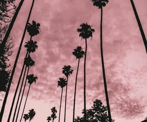 palm trees and west coast image