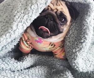 blanket, dog, and doggie image
