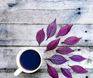 coffee, leaves, and photography image