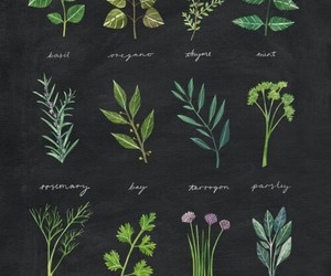 herbs and plants image