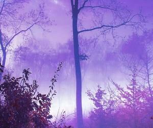tree and purple image