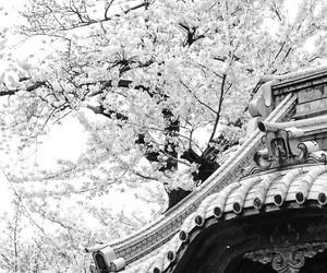 japan, sakura, and pink image