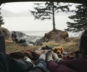 travel, dog, and adventure image