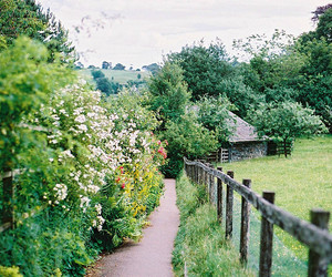 green, nature, and flowers image
