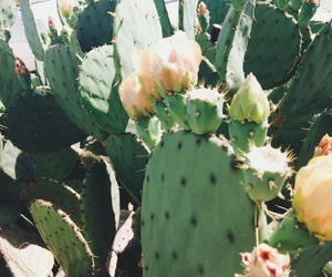 aesthetic, cactus, and flowers image