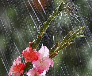 flower and rain image