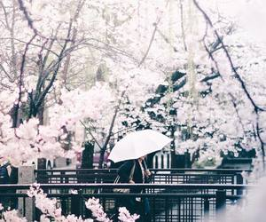 cherry blossoms, japan, and hipster image